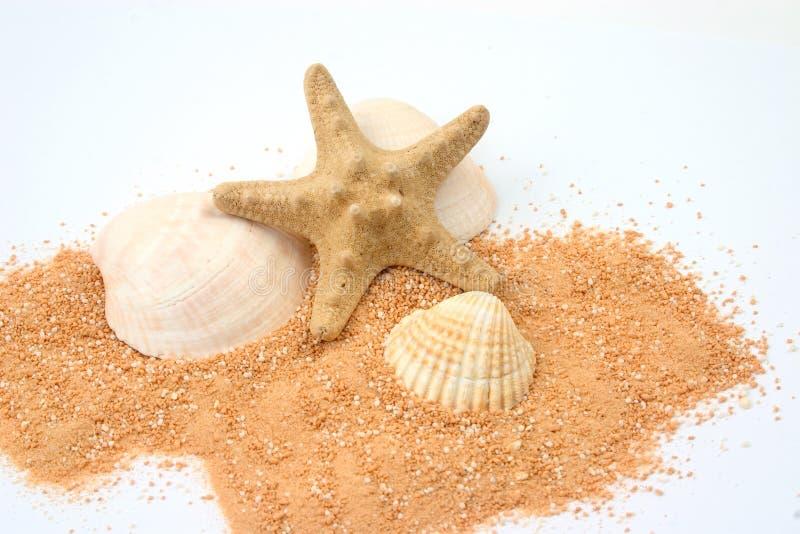 Ancora-vita della spiaggia fotografia stock libera da diritti