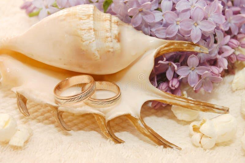 Ancora-vita di un cockleshell con gli anelli di cerimonia nuziale fotografia stock