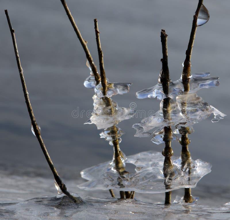 Ancora vita ghiacciata naturale immagini stock libere da diritti