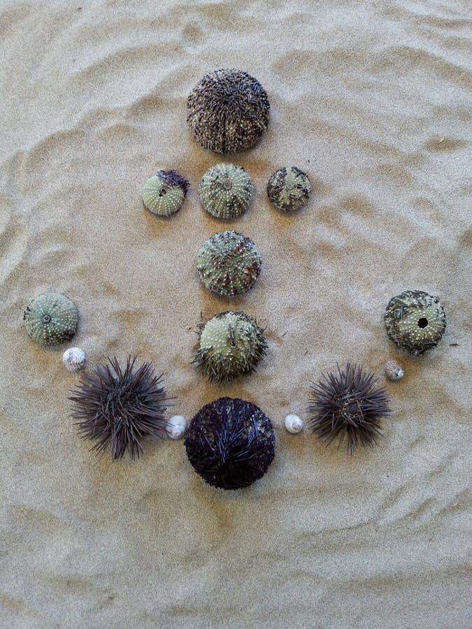 Ancrez le motif créé avec différents oursins sur le sable de plage image stock