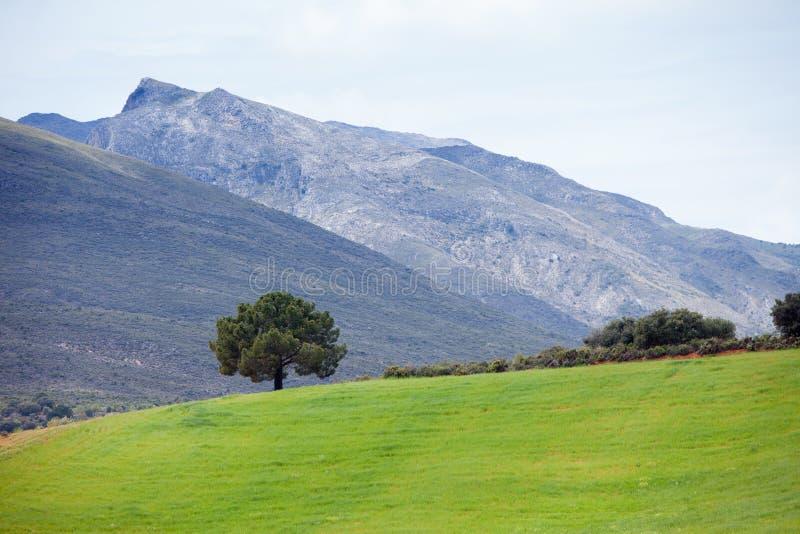 Andalusia landskap royaltyfri foto