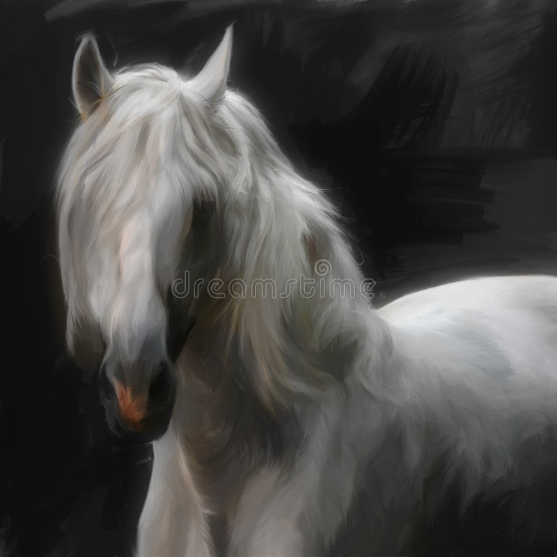 Andalusian horse stock illustration