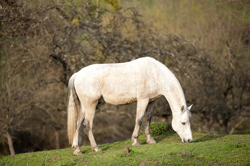 Andalusian horse waiting outside portrait royalty free stock photography
