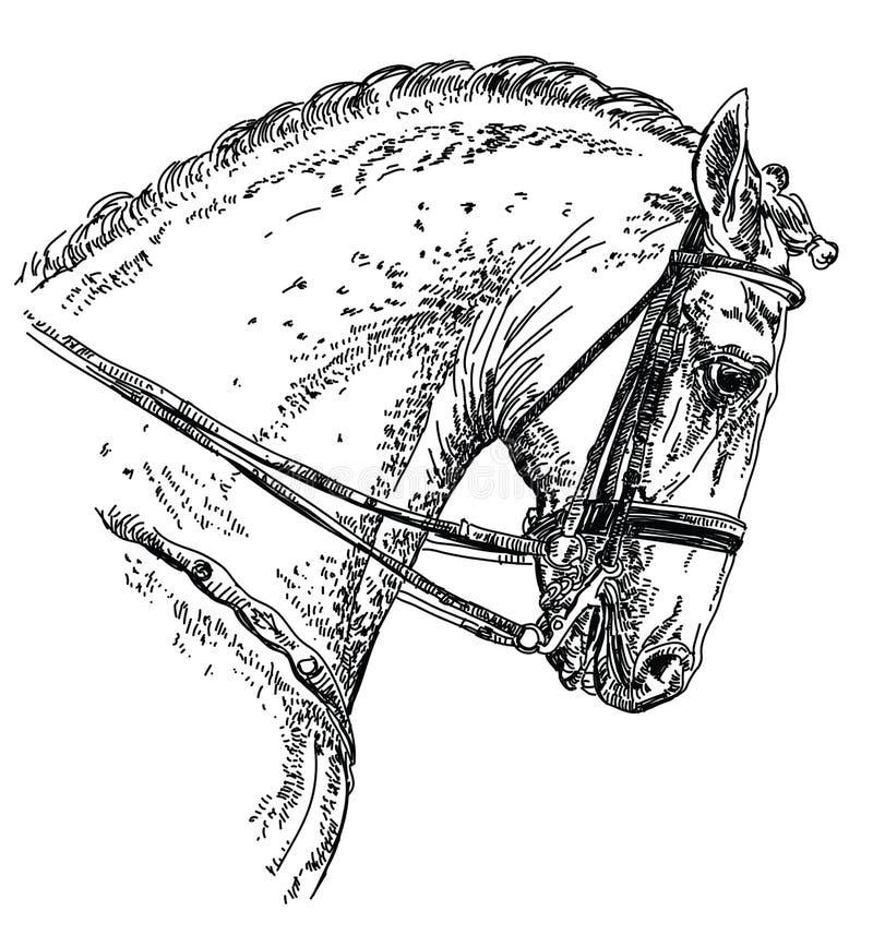 Andalusian illustration för hästhandteckning royaltyfri illustrationer