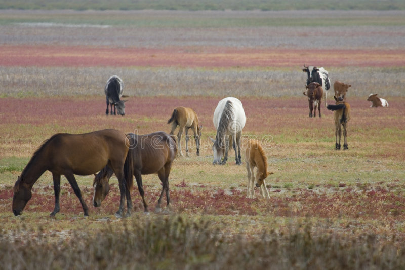 Andalusian Wild-horses royalty free stock image