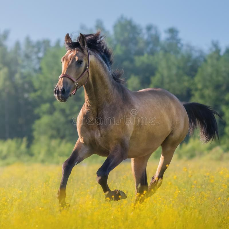 Andalusisches Pferd auf dem Bauernhof lizenzfreies stockbild