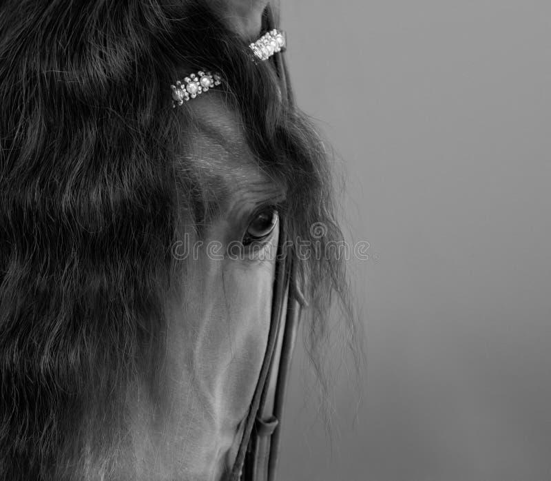 Andalusisches Pferd mit langer Walschlange lizenzfreie stockbilder