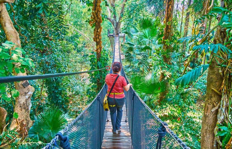 Andando através da ponte de suspensão, caminhada superior da árvore, jardim de Mae Fah Luang, Doi Tung, Chiang Rai, Tailândia fotografia de stock royalty free