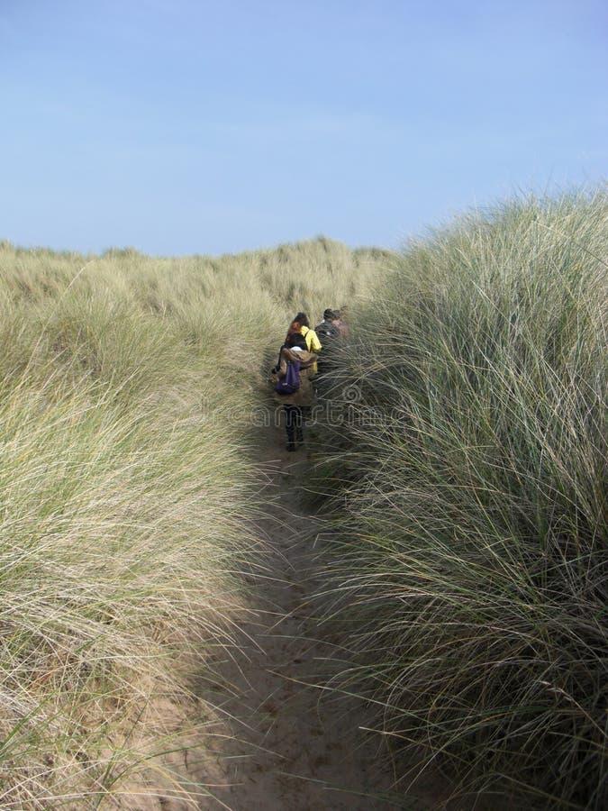 Andando a fuga da charneca em Newburgh, Aberdeenshire, Escócia imagens de stock