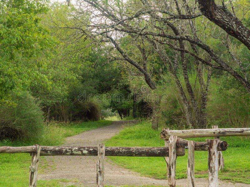 Andando fugas em um Forest Park quieto, sereno, calmo com as árvores verdes vibrantes e a vegetação foto de stock royalty free