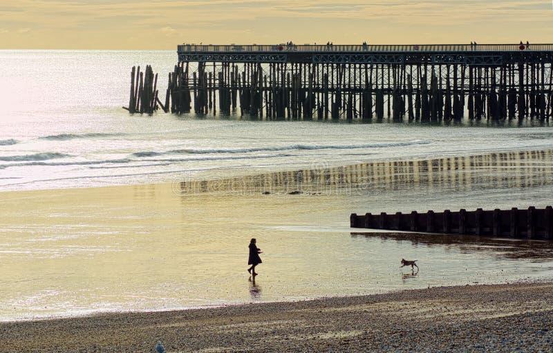 Andando o cão Cena da praia no crepúsculo imagens de stock