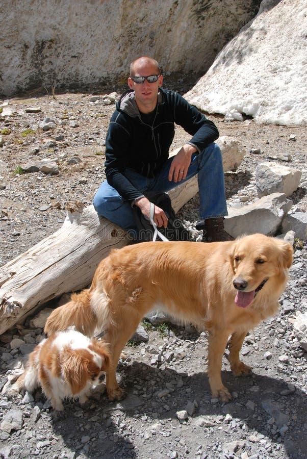 Andando os cães. foto de stock royalty free