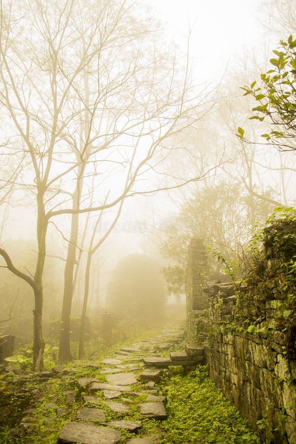 Ande na floresta da névoa no dia chuvoso fotografia de stock royalty free