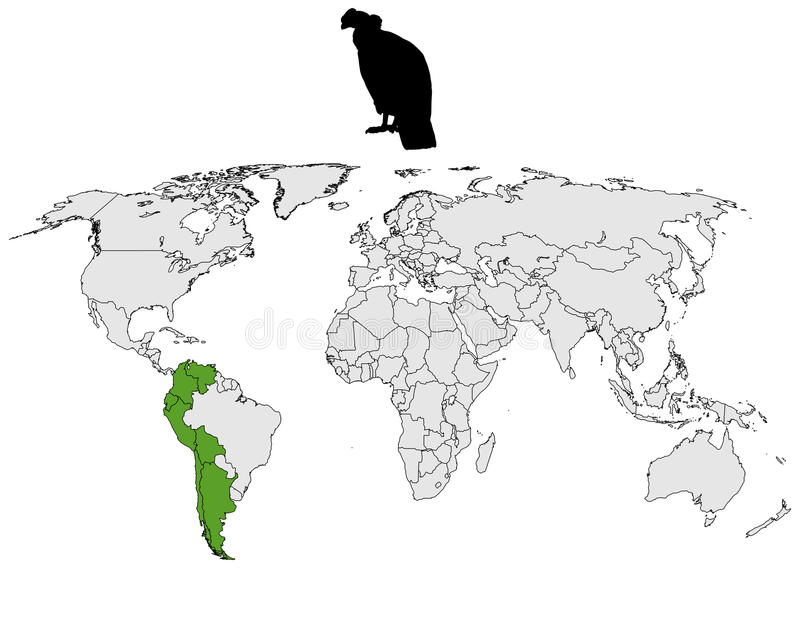 Download Andean Condor distribution stock vector. Image of vulture - 18714274