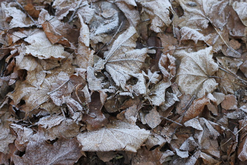 Andedräkt av vintern arkivfoto