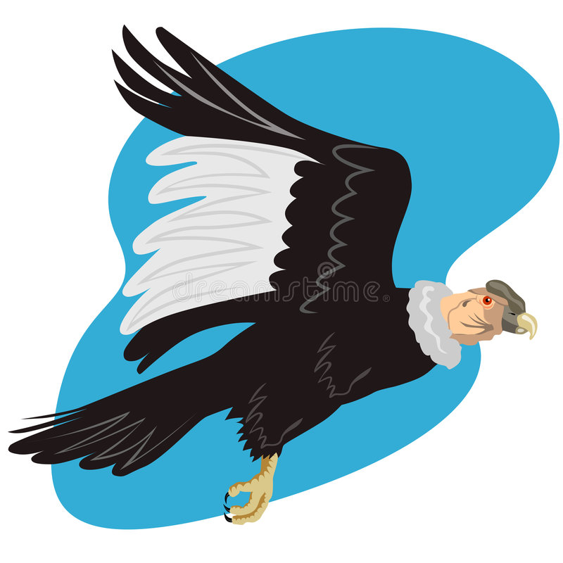Andes condor tijdens de vlucht stock illustratie