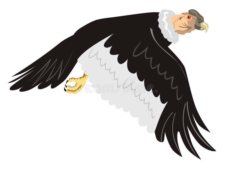 Andes condor tijdens de vlucht vector illustratie