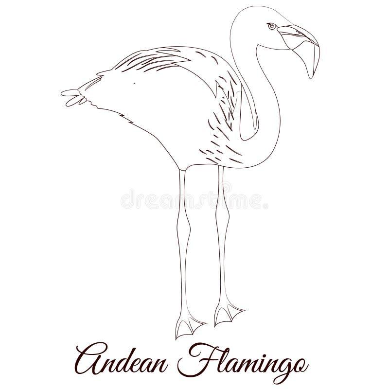 Andes de vogelkleuring van het flamingooverzicht vector illustratie