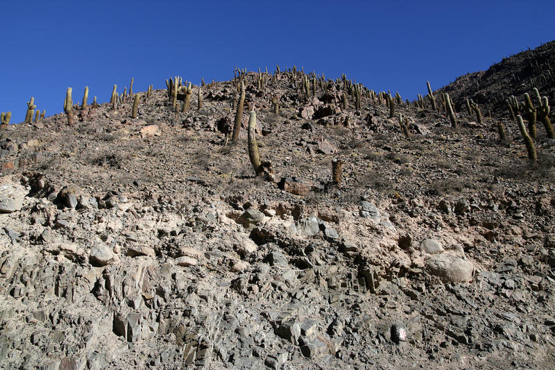 The Andes in Salta province, Argentina royalty free stock images