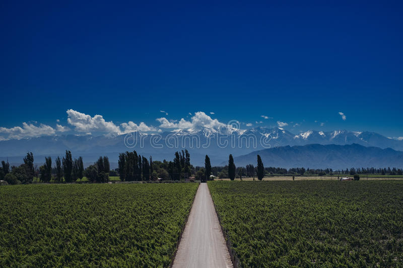 Andes view with Vinewyards and Road in Mendoza, Argentina. Vineyard with Andes on the background and Road in Mendoza, Argentina stock photo