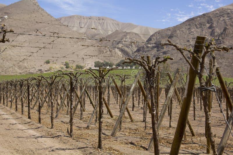 Andes wijngaarden. stock afbeelding