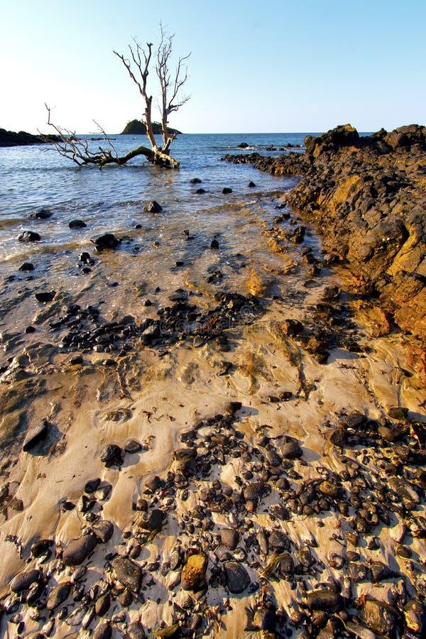 Free Andilana Seaweed In Indian Ocean Mountain Sand Isle Sky Royalty Free Stock Images - 51229739