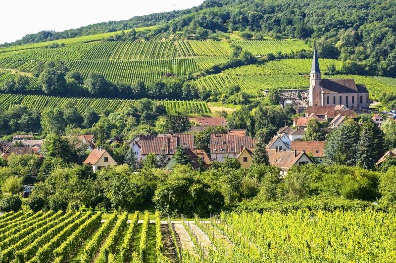 Andlau (Alsacia) - viñedos fotografía de archivo
