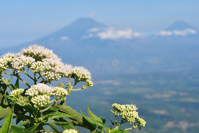 Andong mount royalty free stock photo