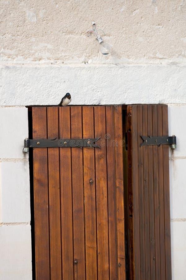 Andorinha de celeiro, Boerenzwaluw, rustica do Hirundo foto de stock royalty free
