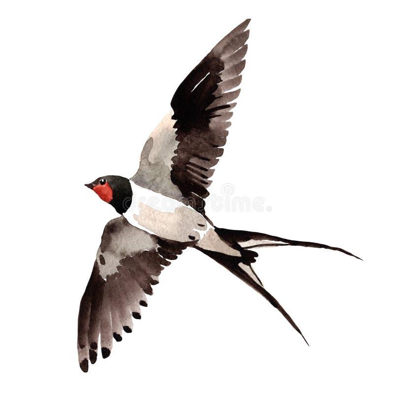 Andorinhas do pássaro de RSky em uns animais selvagens pelo estilo da aquarela isolados ilustração royalty free
