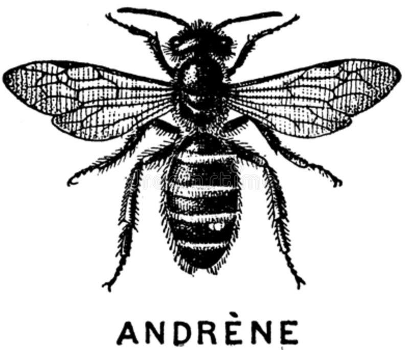 Andrene-oa Free Public Domain Cc0 Image