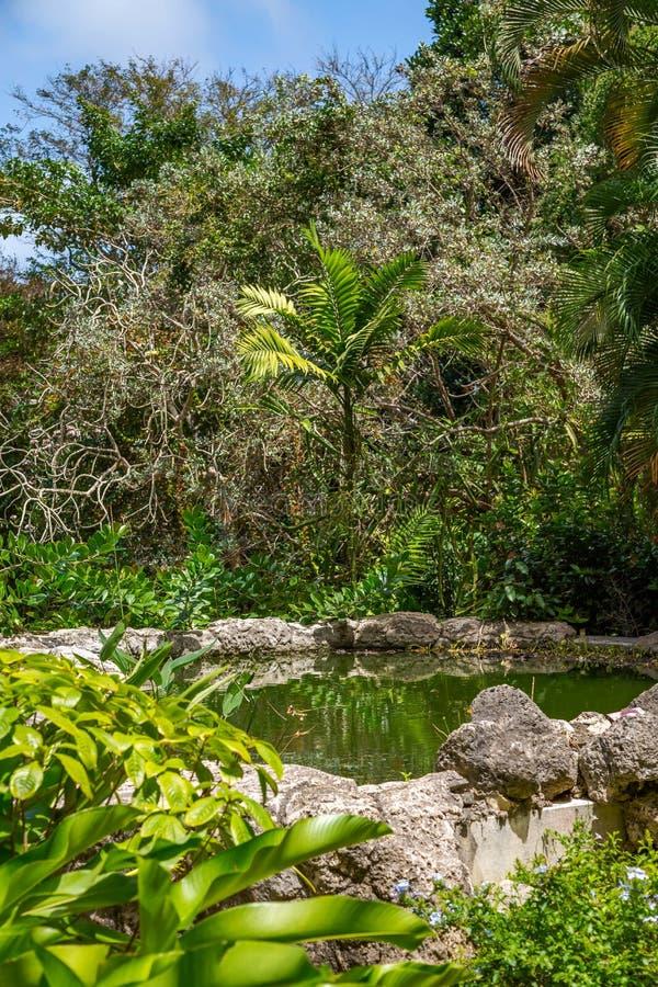 Andromeda Botanic Gardens, Barbados, karibisch stockbilder