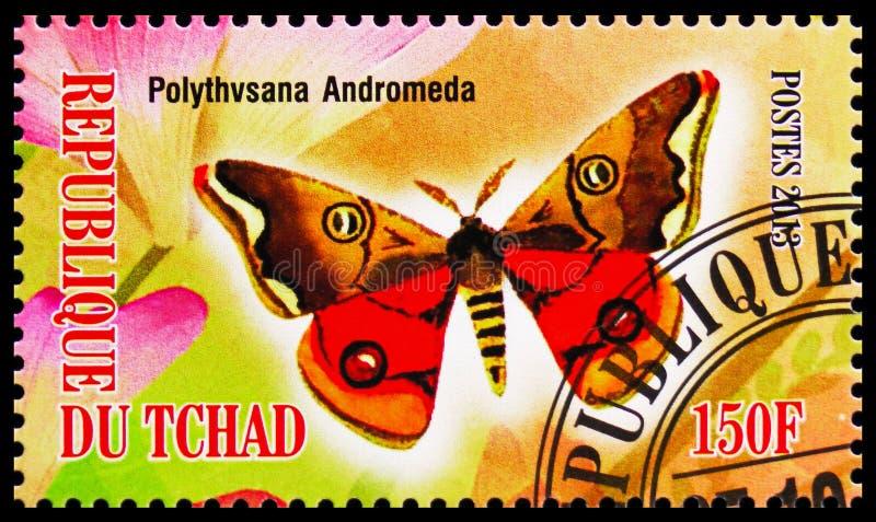Andromeda de Polythysana, serie das borboletas, cerca de 2013 ilustração stock