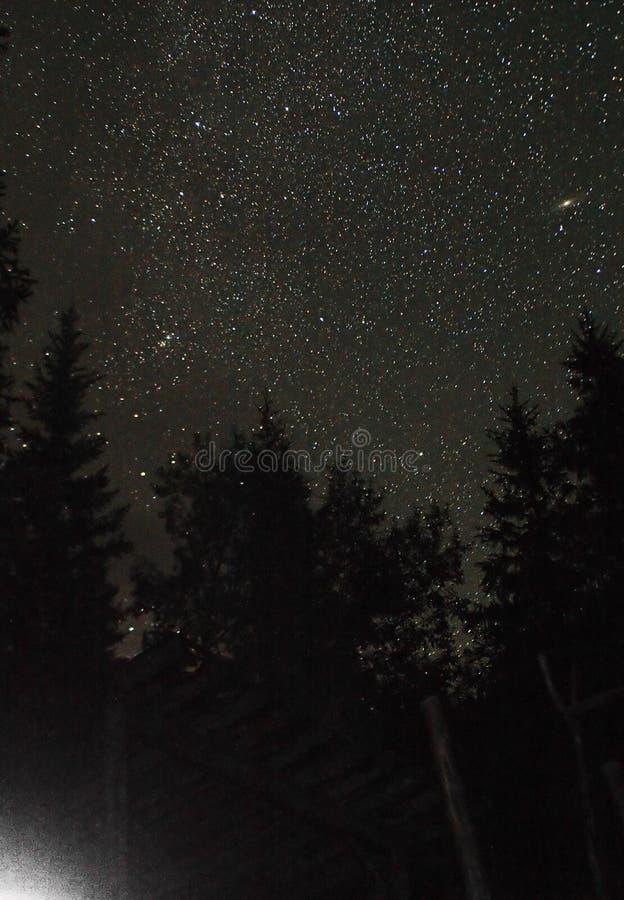 Andromeda onder bos royalty-vrije stock fotografie