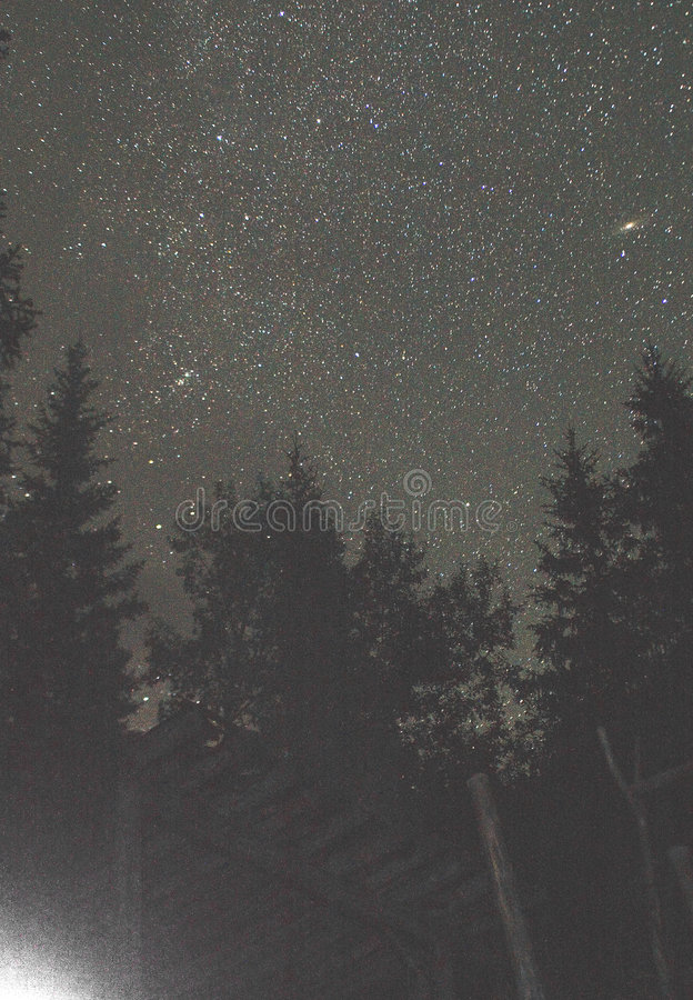 Andromeda and thousand stars under forest royalty free stock photos