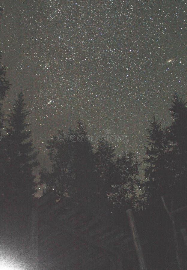 Andromeda unter Wald lizenzfreie stockfotos