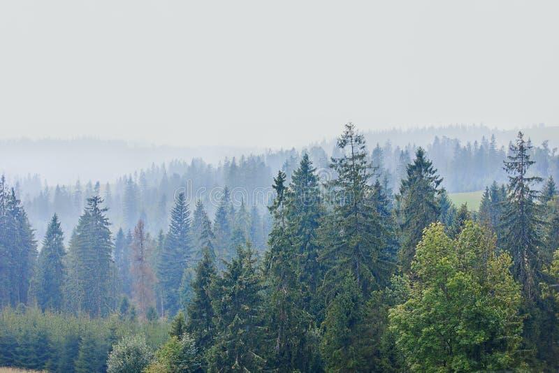 Andscape med berg och den dimmiga skogen fotografering för bildbyråer