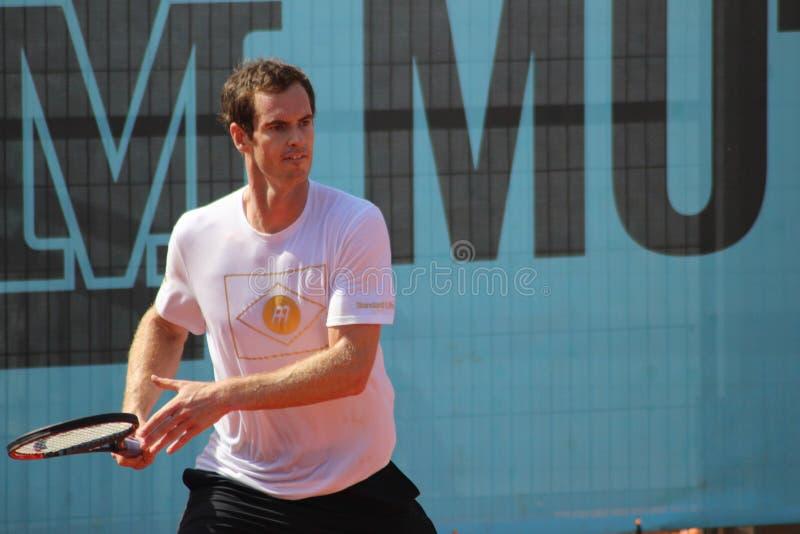 Andy Murray stockfoto