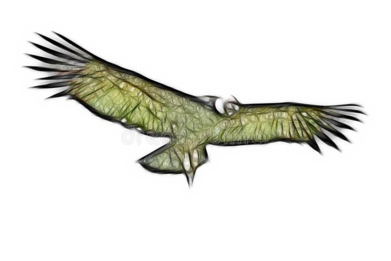 andyjski kondor odizolowywał royalty ilustracja