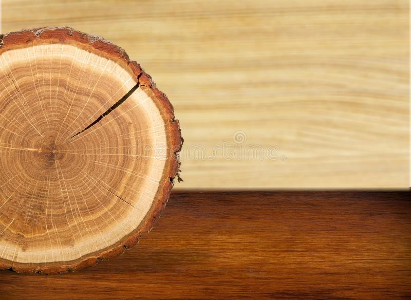 Anel de árvore fotografia de stock