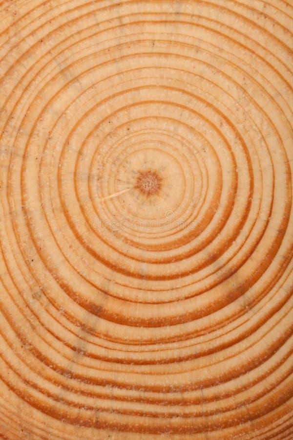 Anel de árvore foto de stock