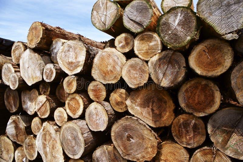 Anel de árvore da madeira do felling fotos de stock