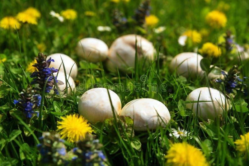 Anel feericamente bonito místico dos cogumelos foto de stock royalty free