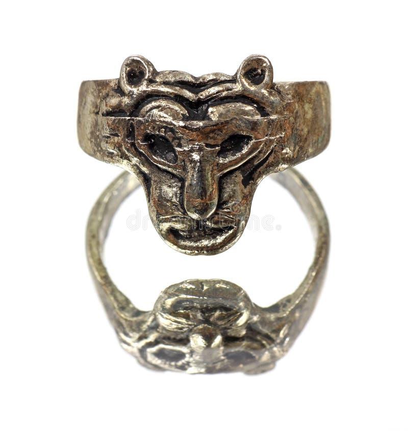 Anel principal do leão na superfície espelhada fotografia de stock