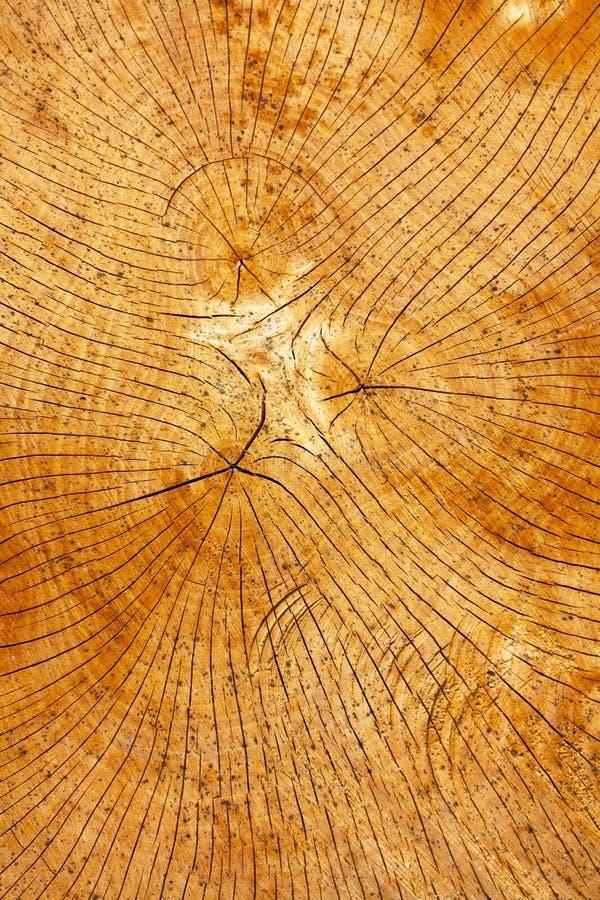 Anelli annuali di un albero fotografie stock libere da diritti