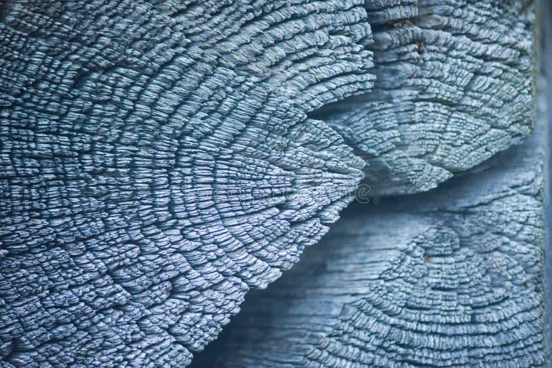 Anelli annuali e crepe sul sufface di legno di vecchia capanna nell'inverno fotografia stock