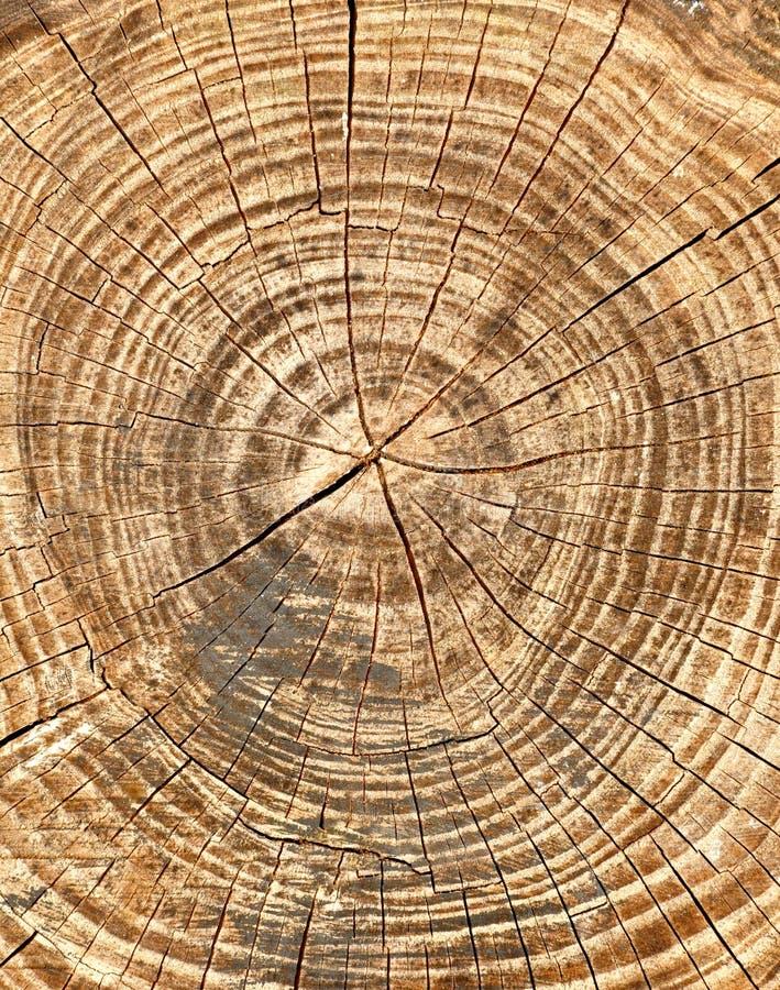 Anelli annuali e crepe in un vecchio albero immagini stock libere da diritti