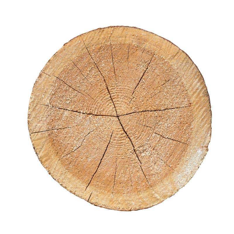 Anelli annuali sul pino del taglio I ceppi hanno visto segheria Tagli il pino immagini stock libere da diritti