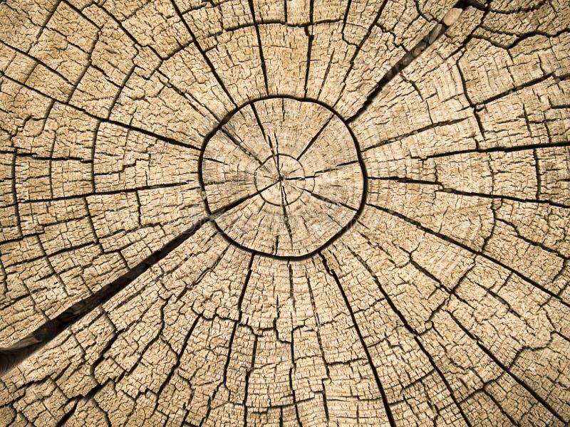 Anelli di albero con le crepe immagine stock libera da diritti