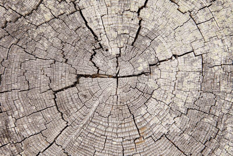 Anelli di albero del legname galleggiante con le crepe immagine stock